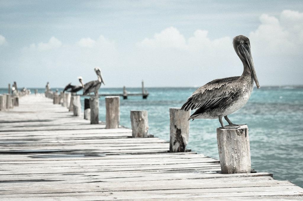 pelican-pier-ocean